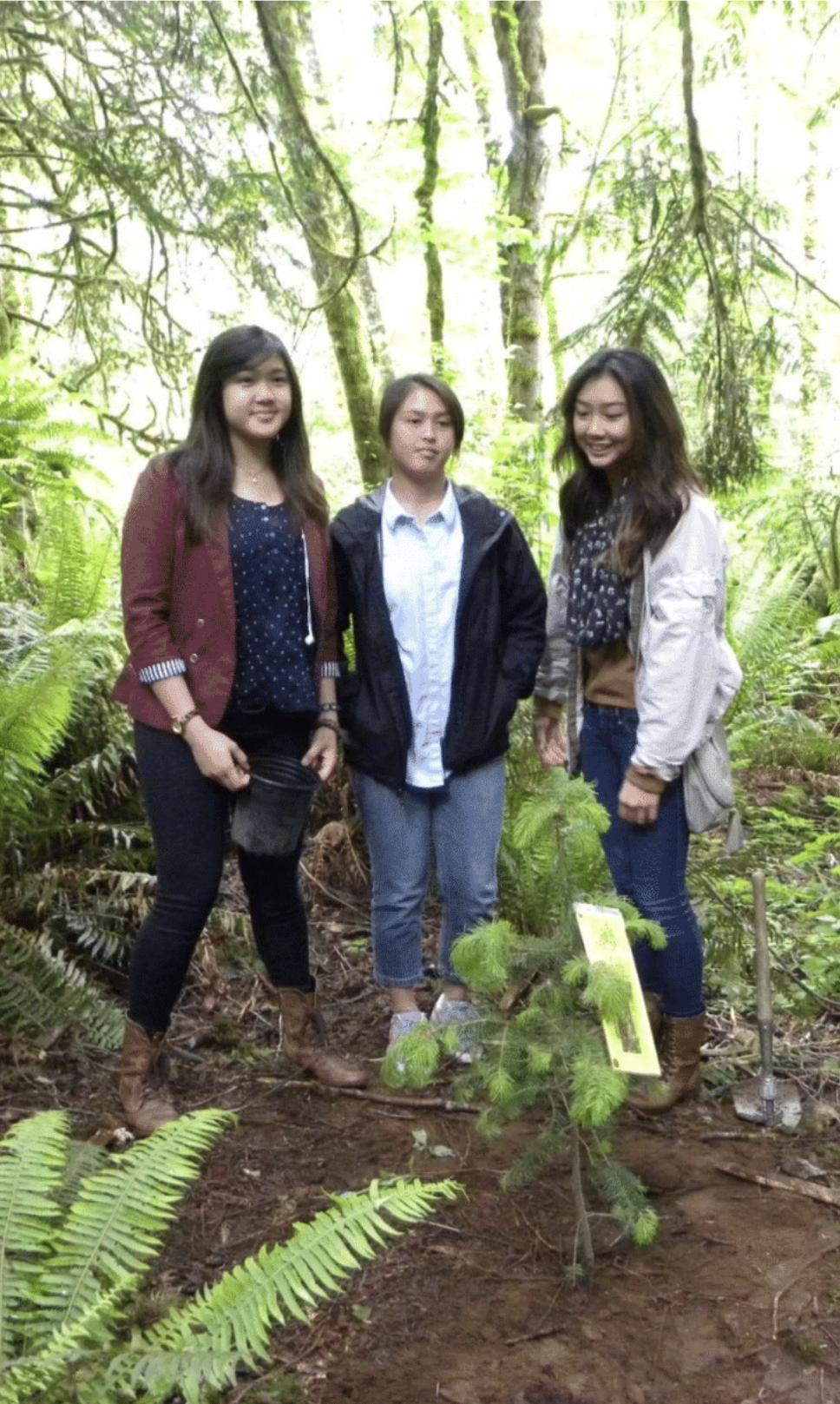 Planting Douglas fir